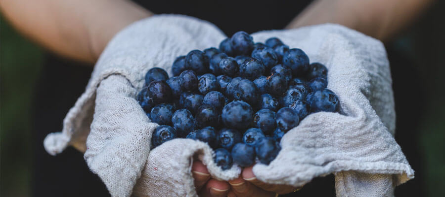 Featured image 7 Healthy Treats for Your Dog Blueberries - 7 Healthy Treats for Your Dog